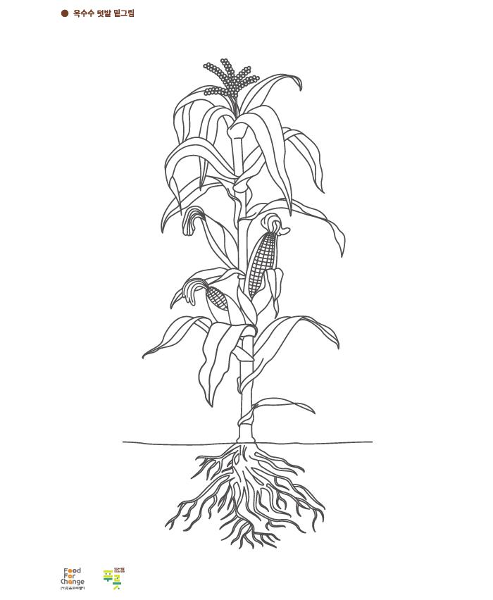 [푸릇] 식물의 몸 활동지.png